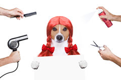 Grooming dog at the hairdressers. Hairdresser dog ready to look beautiful by comb, scissors, dryer, and spray at the wellness spa salon, isolated on white Royalty Free Stock Photos
