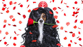 Grooming dog at the hairdressers royalty free stock photos