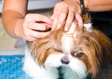Grooming dog stock photos