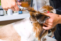 Grooming dog stock photo