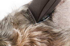 Grooming the dog wool clipper Stock Photography