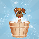 Grooming dogs. Funny illustration of Grooming dogs stock illustration