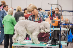 Grooming dogs at the show. St. Petersburg, Russia royalty free stock photo
