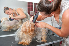Grooming Stock Photo