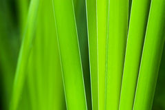 Grooming green grass. Tall grass in early summer Royalty Free Stock Photo