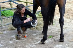 Grooming her horse Stock Image