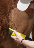 Grooming a horse Stock Images