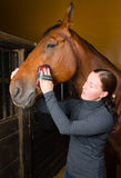 Grooming horse Royalty Free Stock Image