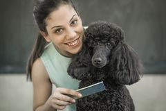 Grooming a little dog in a hair salon for dogs. Beautiful black poodle Stock Photo