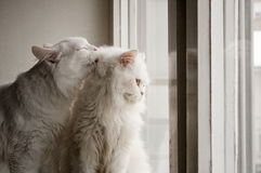 Grooming Stock Images