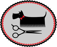 Grooming scottish terrier Royalty Free Stock Photos