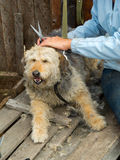 Grooming of stray dog at the shelter Royalty Free Stock Images
