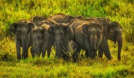 Groop του ελέφαντα στοκ φωτογραφίες
