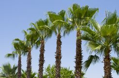 Groop of beautiful palm trees against a blue sky stock photography