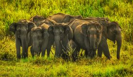 Groop of elephant stock photos