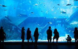 Groot Aquarium in Singapore Royalty-vrije Stock Afbeelding