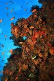 Groot Barrièrerif stock foto