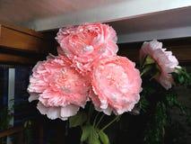 Groot bloemenlandschap op 8 Maart, de Dag van Internationale Vrouwen Onwerkelijke bloemen, modellen, pioenen royalty-vrije stock afbeelding