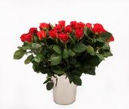 Groot boeket van rode rozen, verjaardagsboeket Royalty-vrije Stock Foto's