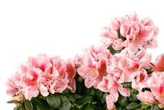 Groot boeket van roze kleuren. (Het Knippen weg) Stock Afbeelding