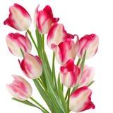 Groot boeket van tulpen op een wit. EPS 10 Stock Foto's