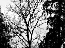 Groot Bomensilhouet bij Zonsondergang royalty-vrije stock foto