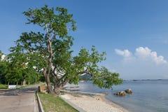 Groot boom overzees strand Stock Foto