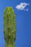 Groot cactus erotisch fallisch beeld Stock Foto's