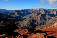Groot Canion Nationaal Park royalty-vrije stock fotografie