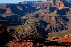Groot Canion Nationaal Park Royalty-vrije Stock Afbeeldingen