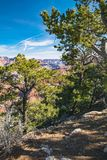 Groot Canion Nationaal Park, de V Stock Afbeelding