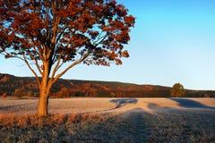 Groot de herfsteik en gras op een weide rond Eenzame mooie de herfstboom Silhouet solitaire boom royalty-vrije stock foto