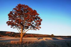 Groot de herfsteik en gras op een weide rond Eenzame mooie de herfstboom Silhouet solitaire boom stock afbeelding