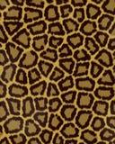 Groot de vlekken kort bont van de luipaard vector illustratie