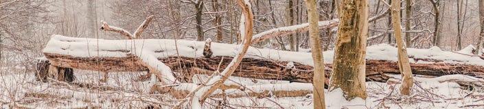 Groot die boomlogboek met sneeuw in het bos wordt behandeld Royalty-vrije Stock Foto's