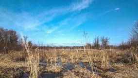 Groot die moerasland /grassland met riet door de herfstbomen wordt gegrenst - op het Crex-Gebied van het Weidenwild in Noordelijk stock foto's