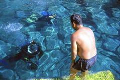 Groot duik!! royalty-vrije stock foto's