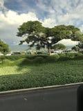 Groot Eiland Hawaï royalty-vrije stock afbeeldingen