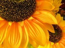 Groot en Kleine zonnebloem Stock Foto