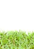 Groot Gras Met bladen Royalty-vrije Stock Fotografie
