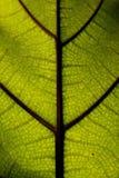 Groot groen blad in macrofotografie, close-upfoto royalty-vrije stock foto's