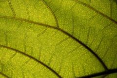 Groot groen blad in macrofotografie, close-upfoto royalty-vrije stock fotografie