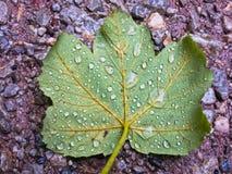 Groot groen blad op een grint treking weg tijdens het regenen Royalty-vrije Stock Foto's