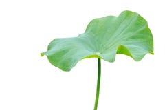 Groot groen die lotusbloemblad op wit wordt geïsoleerd Gespaard met het knippen van weg royalty-vrije stock afbeelding