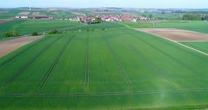 Groot groen gebied, die over het gebied, het groeien installaties, landbouw, Groot groen gebied op de achtergrond van klein vlieg stock videobeelden