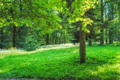 Groot Groen Park Royalty-vrije Stock Afbeeldingen