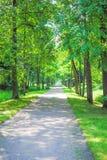 Groot Groen Park Stock Foto