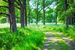 Groot Groen Park Royalty-vrije Stock Foto
