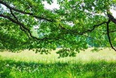 Groot Groen Park Stock Foto's