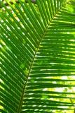 Groot groen verlof Stock Foto's